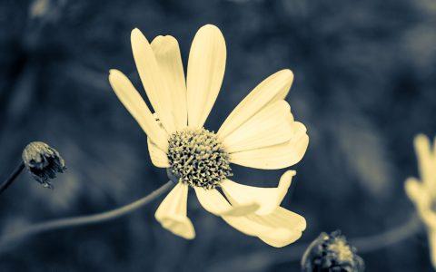 flor amarilla sobre fondo gris